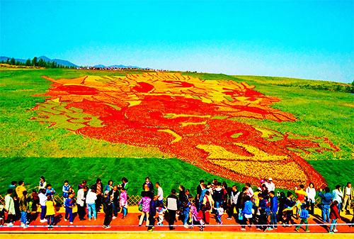 10月5日,游客在河北秦皇岛市东徐庄景区欣赏大地景观《向日葵》.