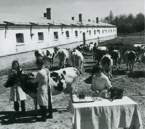 农场养牛场均配有兽医