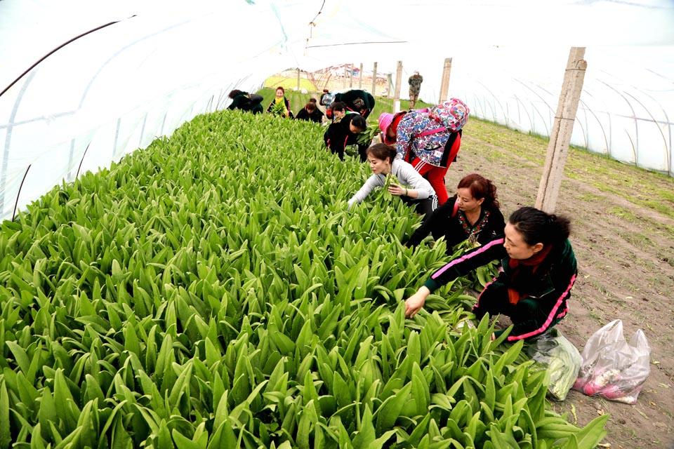 乡村旅游采摘促农增收