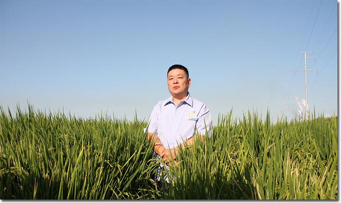 新疆天业:水稻种在旱地里 每亩最高可产800公斤