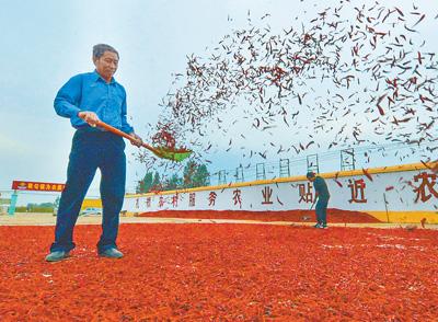 内蒙古:科学种大豆 收获金豆豆