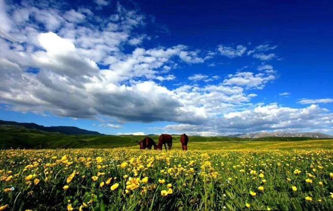 美丽兵团 | 九师一六五团:云上草原,天边净土