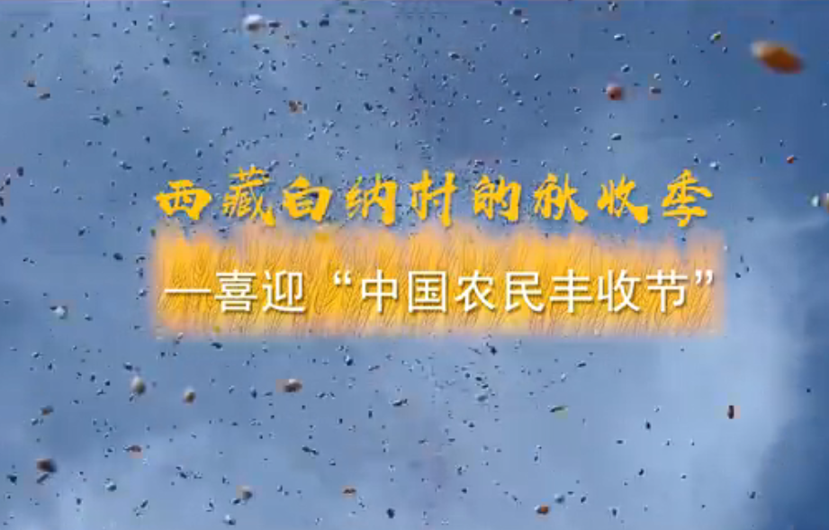 """西藏白纳村的秋收季——喜迎""""中国农民丰收节"""""""