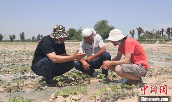中国膜下滴灌技术再出国门 乌兹别克斯坦示范推广逾6000亩