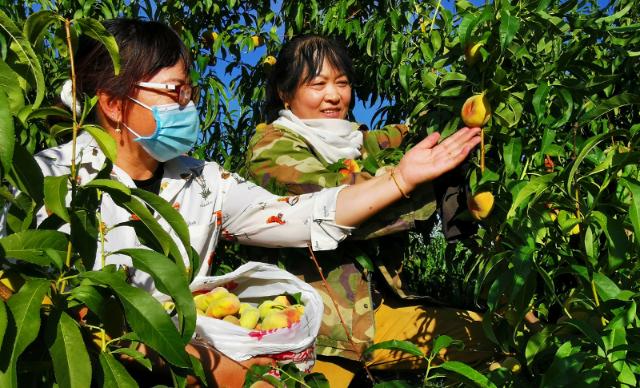 观光旅游 促进种植户增收