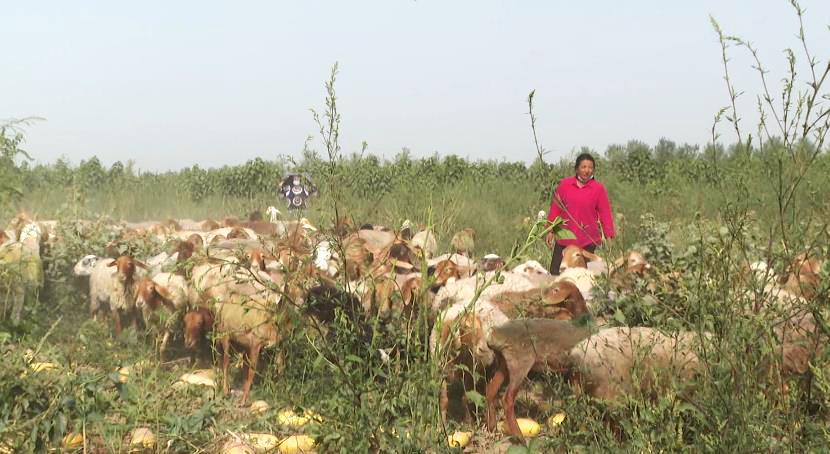 二二四团和泰新村村民帕太姆·萨代提:养殖路上奔小康