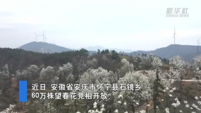 望春花开 乡村入画