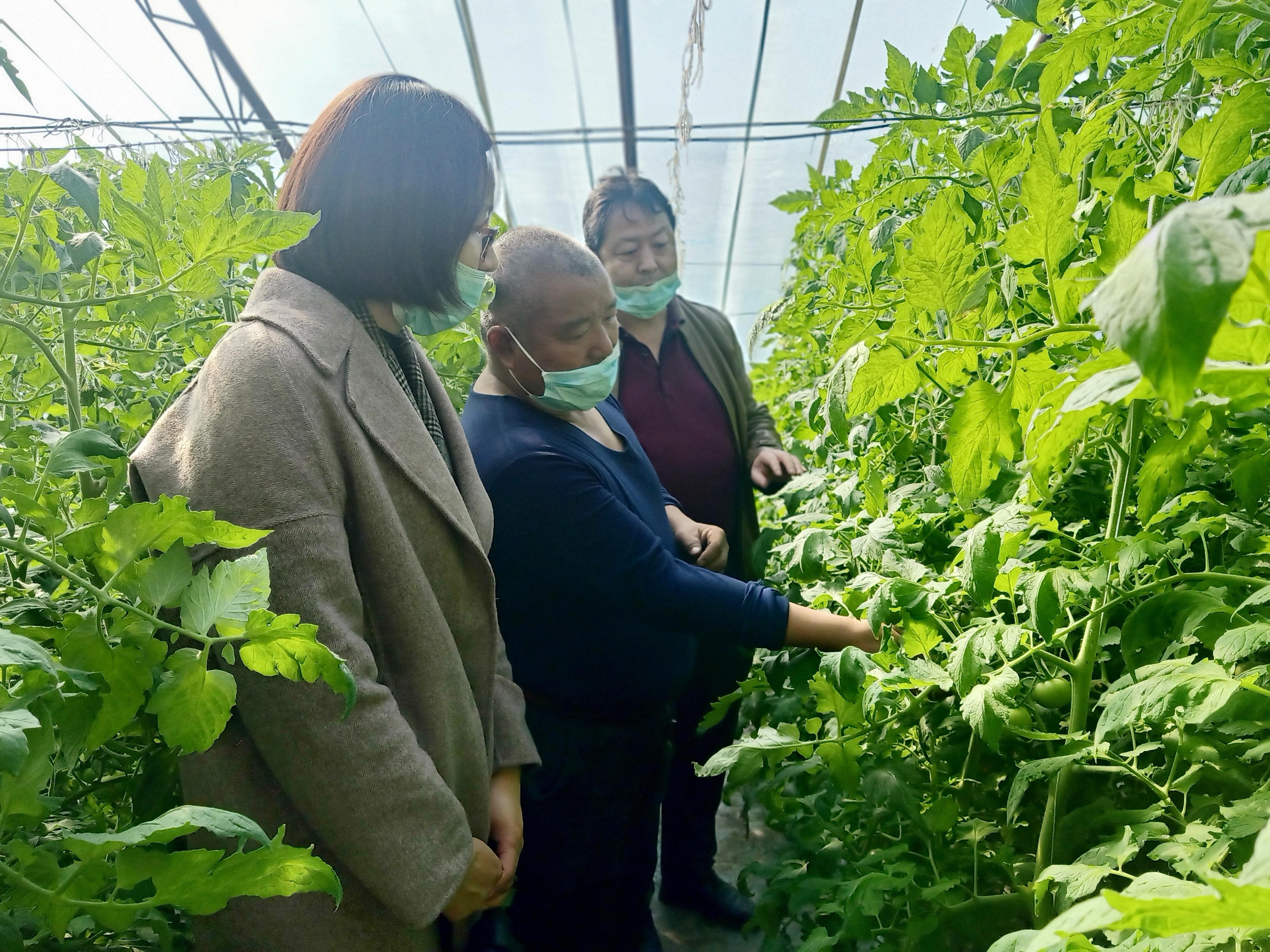 九师:科技服务助农增收