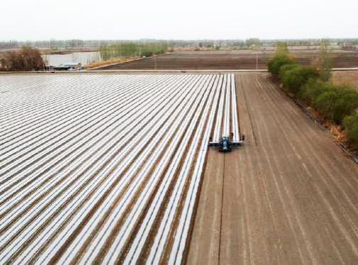 一师阿拉尔市200万亩棉花开始机械化播种