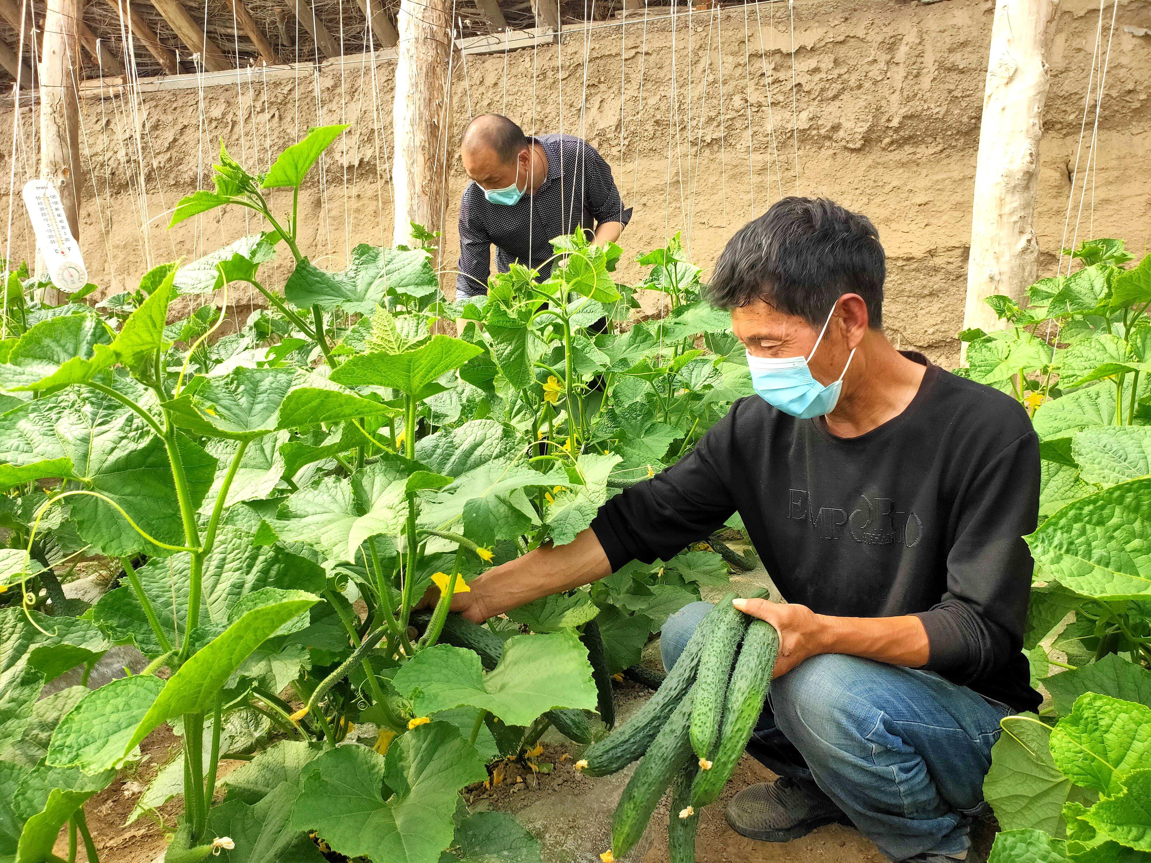 一三四团:设施农业促增收