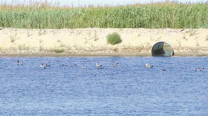 """一师阿拉尔市:""""纳污塘""""变为生态湿地"""