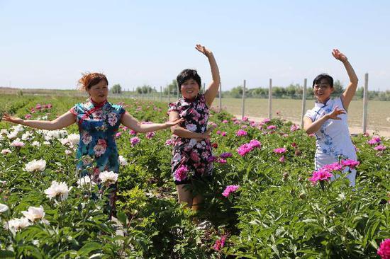 胡杨河市天山牡丹园芍药花开等你来
