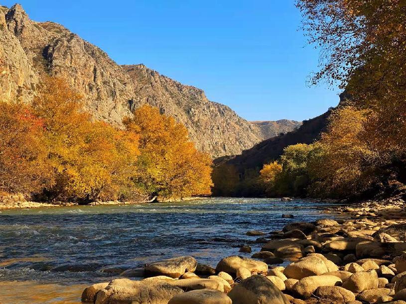 特克斯:库尔代河畔秋色浓